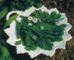 Мясной салат с одуванчиками